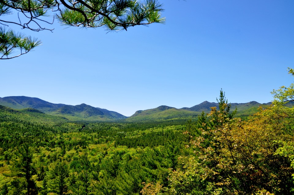 Blue summer sky, green trees, view of the Adirondacks